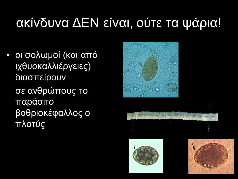 ακίνδυνα ΔΕΝ είναι, ούτε τα ψάρια! οι σολωμοί (και από ιχθυοκαλλιέργειες) διασπείρουν σε ανθρώπους το παράσιτο βοθριοκέφαλλος ο πλατύς