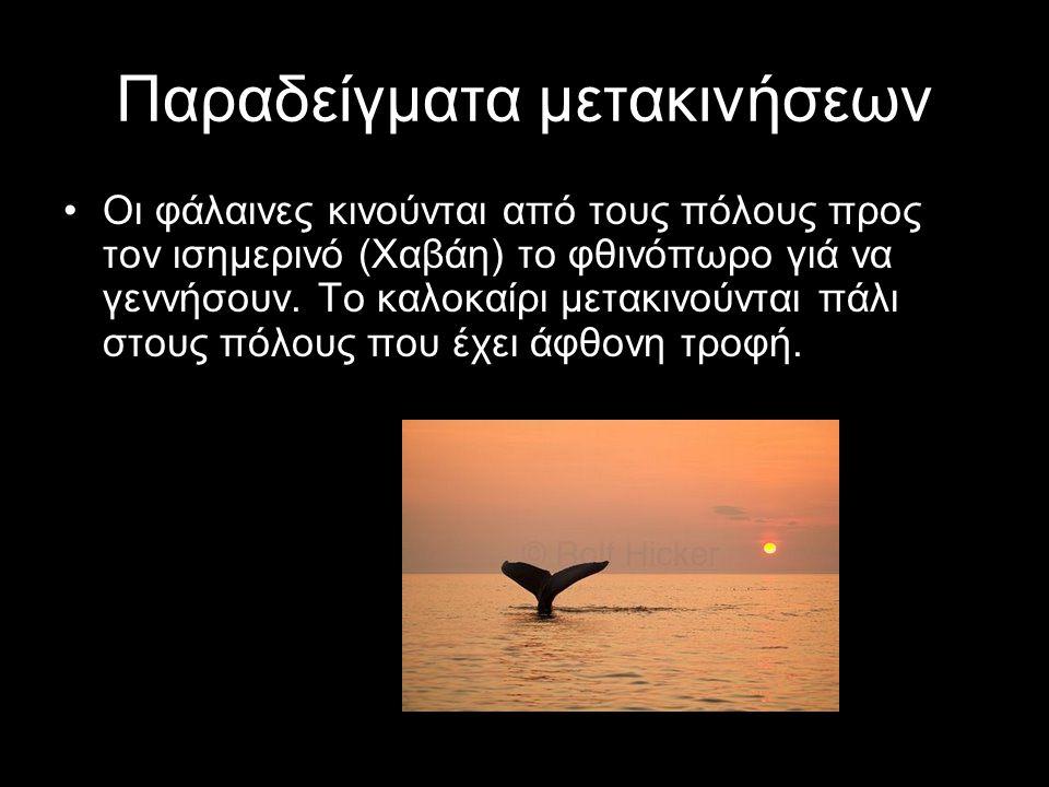 Παραδείγματα μετακινήσεων Οι φάλαινες κινούνται από τους πόλους προς τον ισημερινό (Χαβάη) το φθινόπωρο γιά να γεννήσουν. Το καλοκαίρι μετακινούνται π
