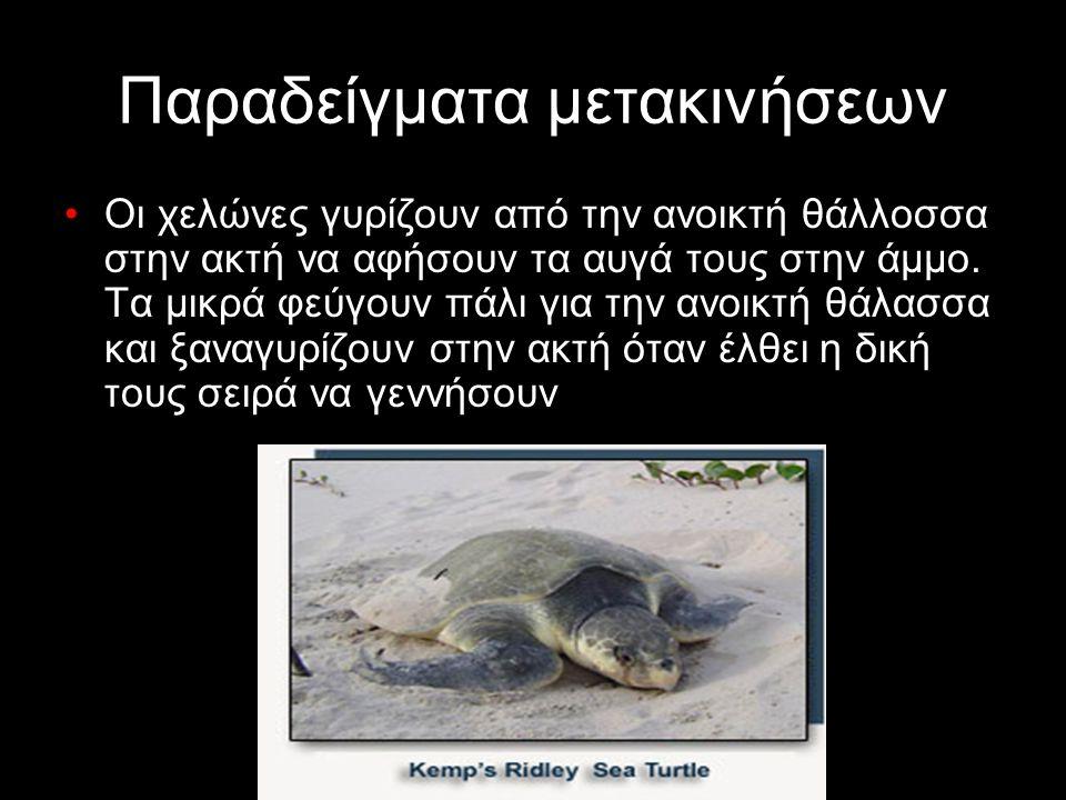 Παραδείγματα μετακινήσεων Οι χελώνες γυρίζουν από την ανοικτή θάλλοσσα στην ακτή να αφήσουν τα αυγά τους στην άμμο. Τα μικρά φεύγουν πάλι για την ανοι