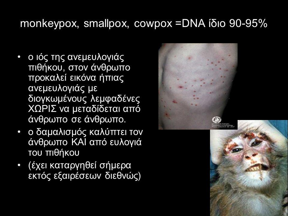 monkeypox, smallpox, cowpox =DNA ίδιο 90-95% ο ιός της ανεμευλογιάς πιθήκου, στον άνθρωπο προκαλεί εικόνα ήπιας ανεμευλογιάς με διογκωμένους λεμφαδένε