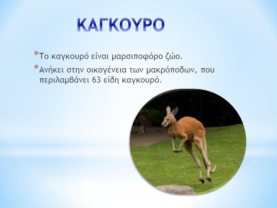 * Το καγκουρό είναι μαρσιποφόρο ζώο.
