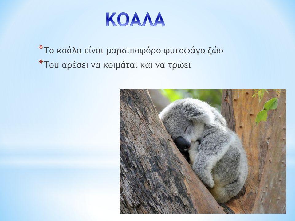 * Το κοάλα είναι μαρσιποφόρο φυτοφάγο ζώο * Του αρέσει να κοιμάται και να τρώει