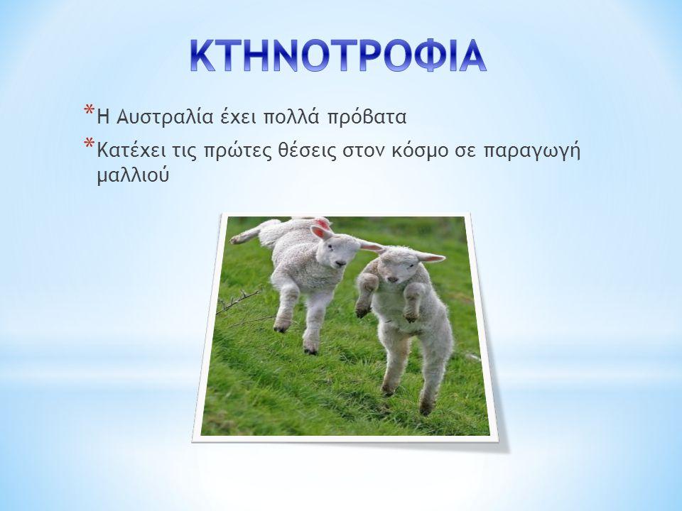 * Η Αυστραλία έχει πολλά πρόβατα * Κατέχει τις πρώτες θέσεις στον κόσμο σε παραγωγή μαλλιού