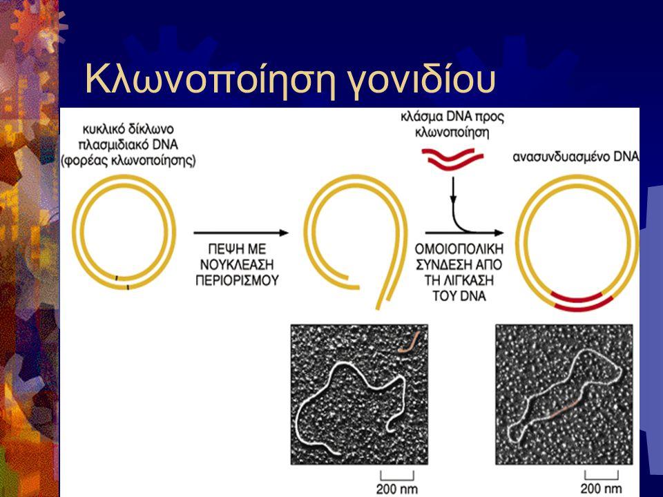 Κλωνοποίηση γονιδίου
