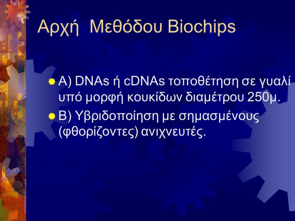 Αρχή Μεθόδου Biochips  A) DNAs ή cDNAs τοποθέτηση σε γυαλί υπό μορφή κουκίδων διαμέτρου 250μ.  Β) Υβριδοποίηση με σημασμένους (φθορίζοντες) ανιχνευτ