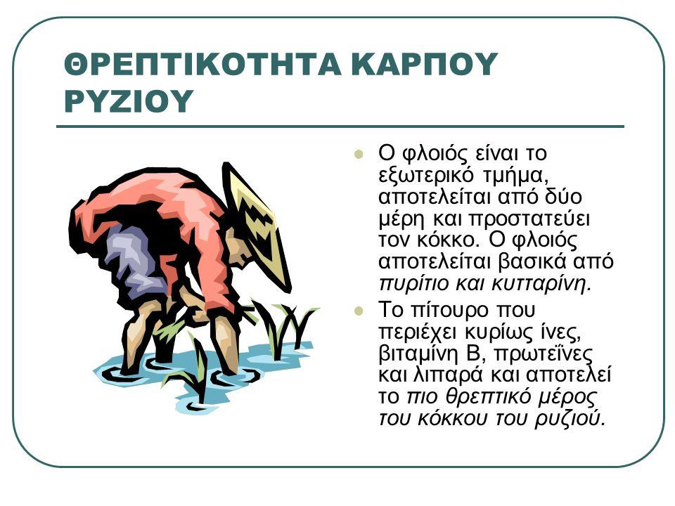 ΡΥΖΙ Oryza sativa L Βασικό μέλος της αγροτικής οικογένειας και είναι το πλέον σημαντικό σιτηρό στον αναπτυσσόμενο κόσμο.