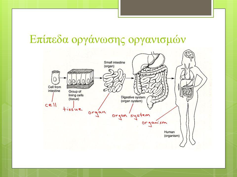 Ιστοί επιθηλιακός Ερειστικός Νευρικός Μυϊκός Γραμμωτοί Λείοι Καρδιακός συνδετικός χόνδρινος οστίτης αίμα