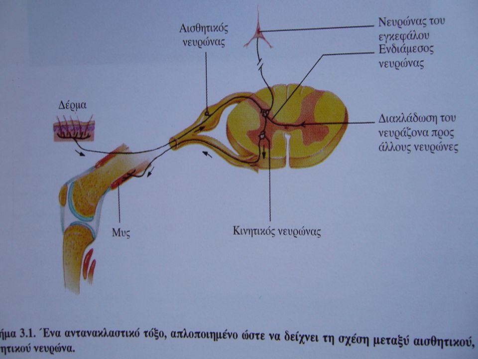 Το αποτέλεσμα που θα έχει ένας νευροδιαβιβαστής δεν είναι πάντα το ίδιο αλλά εξαρτάται και από το είδος του υποδοχέα του μετασυναπτικού νευρώνα (υπάρχουν διάφοροι για κάθε νευροδιαβιβαστή)