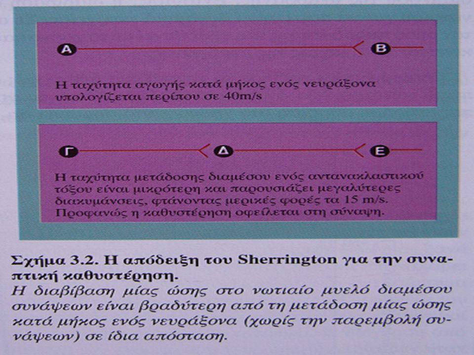 Συνάψεις, φάρμακα και συμπεριφορά «καλές» και «κακές» ουσίες ανταγωνιστές/αγωνιστές, χημική συγγένεια (υποδοχέας) επηρεάζεται κάποιο στάδιο της νευροδιαβίβασης διεγερτικές ουσίες αμφεταμίνη, κοκαΐνη (ενίσχυση ντοπαμίνης εμποδίζοντας την επαναπρόσληψη) καφεΐνη (διαστέλει τα αγγεία, εμποδίζει την (προσυναπτική) αναστολή απελευθέρωσης γλουταμινικού οξέως από την αδενοσύνη) νικοτίνη (διέγερση χολινεργικών υποδοχέων) οποιούχα: μορφίνη, ηρωίνη, μεθαδόνη (ειδικοί υποδοχείς για ενδορφίνες οι οποίες ανακαλύφθηκαν έτσι) μαριχουάνα (ειδικοί υποδοχείς για ανταμίδιο) παραισθησιγόνες ουσίες (διέγερση υποδοχέα σεροτονίνης) οινόπνευμα (μεταξύ άλλων ενισχύει τη δράση του GABA)