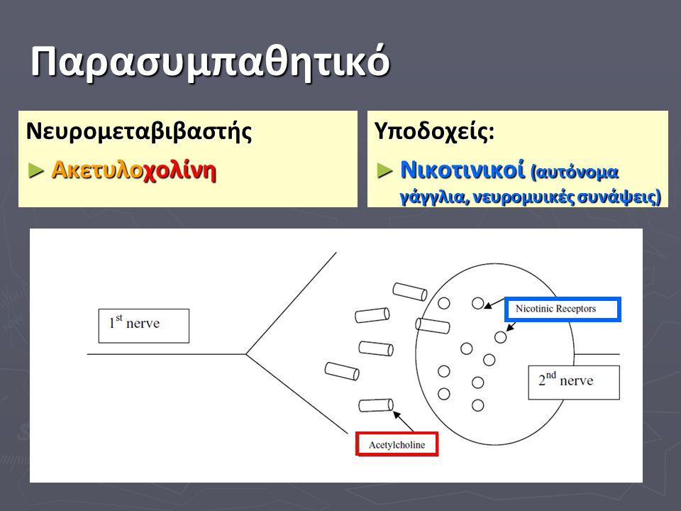 Παρασυμπαθητικό Νευρομεταβιβαστής ► Ακετυλοχολίνη Υποδοχείς: ► Νικοτινικοί (αυτόνομα γάγγλια, νευρομυικές συνάψεις)
