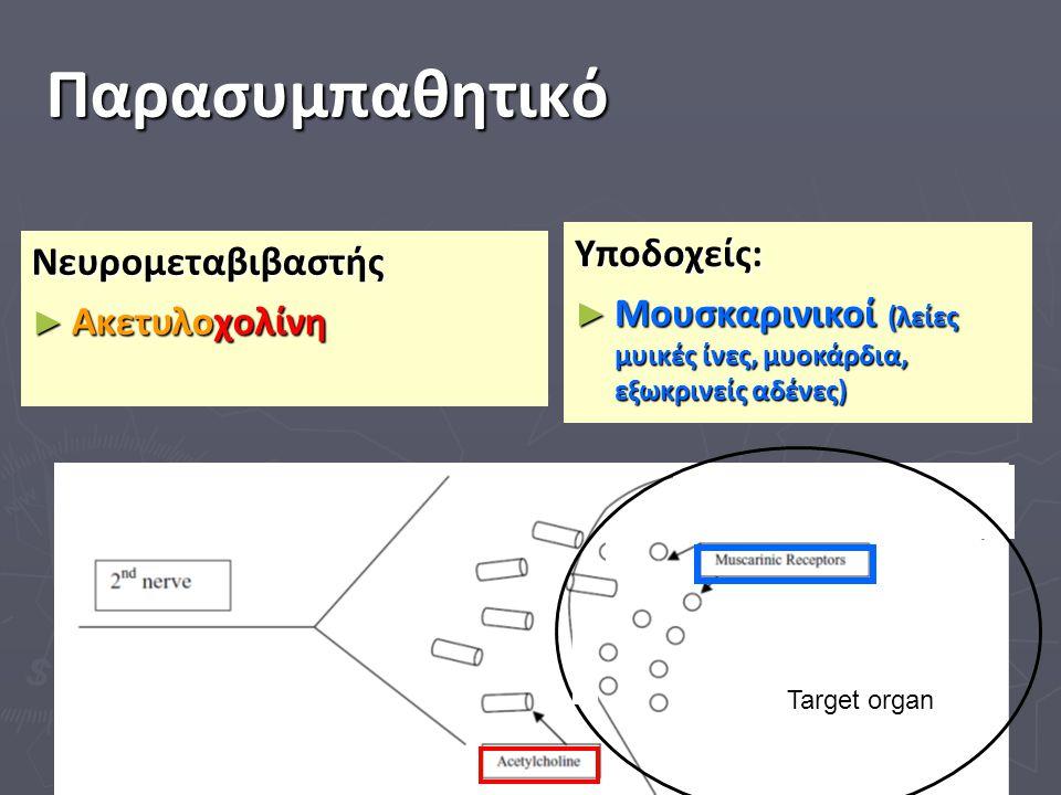 Παρασυμπαθητικό Target organ kkkkkkkkkkkkkkkkkkkkkkkk ll ll ll l kkkkkk Υποδοχείς: ► Μουσκαρινικοί (λείες μυικές ίνες, μυοκάρδια, εξωκρινείς αδένες) Ν