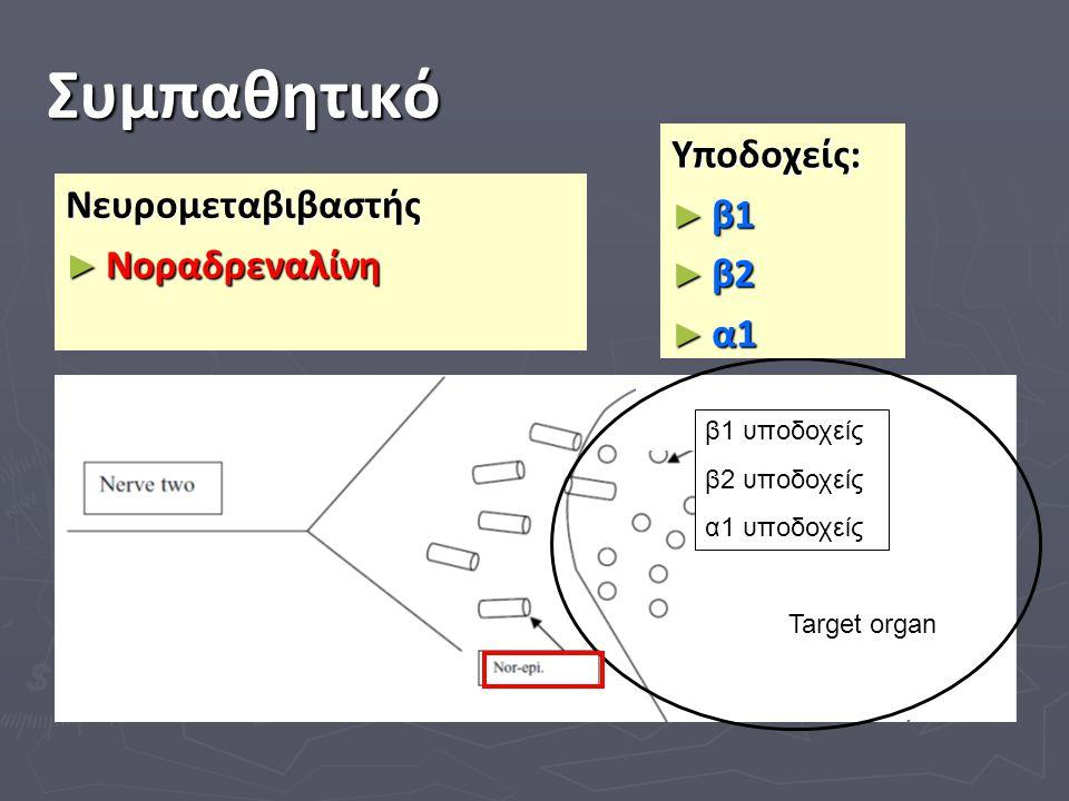 Συμπαθητικό Target organ kkkkkkkkkkkkkkkkkkkkkkkk ll ll ll l Νευρομεταβιβαστής ► Νοραδρεναλίνη Υποδοχείς: ► β1 ► β2 ► α1 β1 υποδοχείς β2 υποδοχείς α1