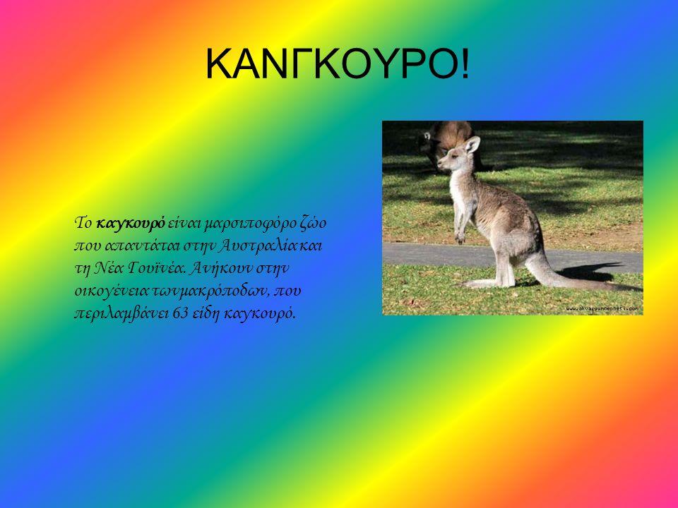 ΚΑΝΓΚΟΥΡΟ! Το καγκουρό είναι μαρσιποφόρο ζώο που απαντάται στην Αυστραλία και τη Νέα Γουϊνέα. Ανήκουν στην οικογένεια τωνμακρόποδων, που περιλαμβάνει
