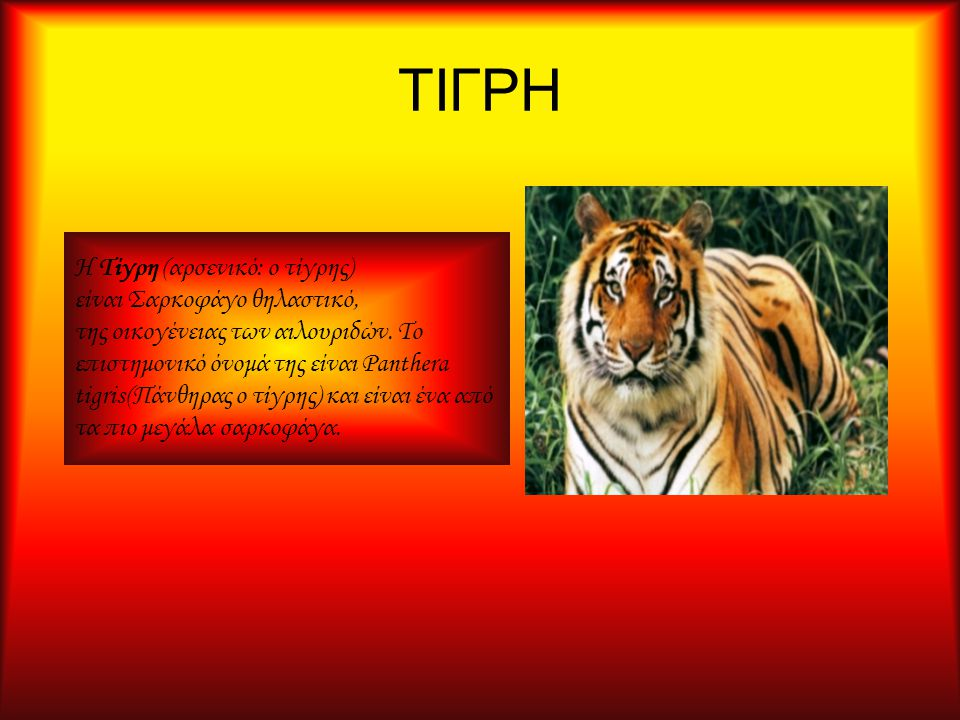 ΤΙΓΡΗ Η Τίγρη (αρσενικό: ο τίγρης) είναι Σαρκοφάγο θηλαστικό, της οικογένειας των αιλουριδών. Το επιστημονικό όνομά της είναι Panthera tigris(Πάνθηρας