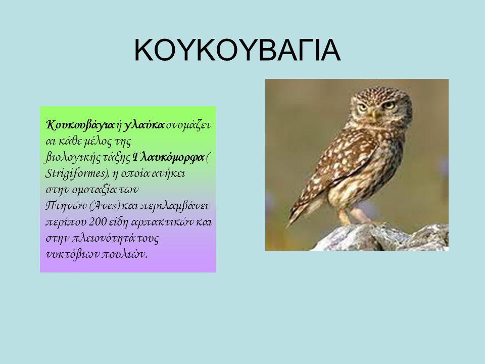 ΚΟΥΚΟΥΒΑΓΙΑ Κουκουβάγια ή γλαύκα ονομάζετ αι κάθε μέλος της βιολογικής τάξης Γλαυκόμορφα ( Strigiformes), η οποία ανήκει στην ομοταξία των Πτηνών (Ave