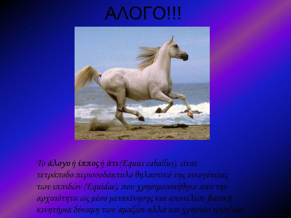 ΑΛΟΓΟ!!! Το άλογο ή ίππος ή άτι (Equus caballus), είναι τετράποδο περισσοδάκτυλο θηλαστικό της οικογένειας των ιππιδών (Equidae), που χρησιμοποιήθηκε