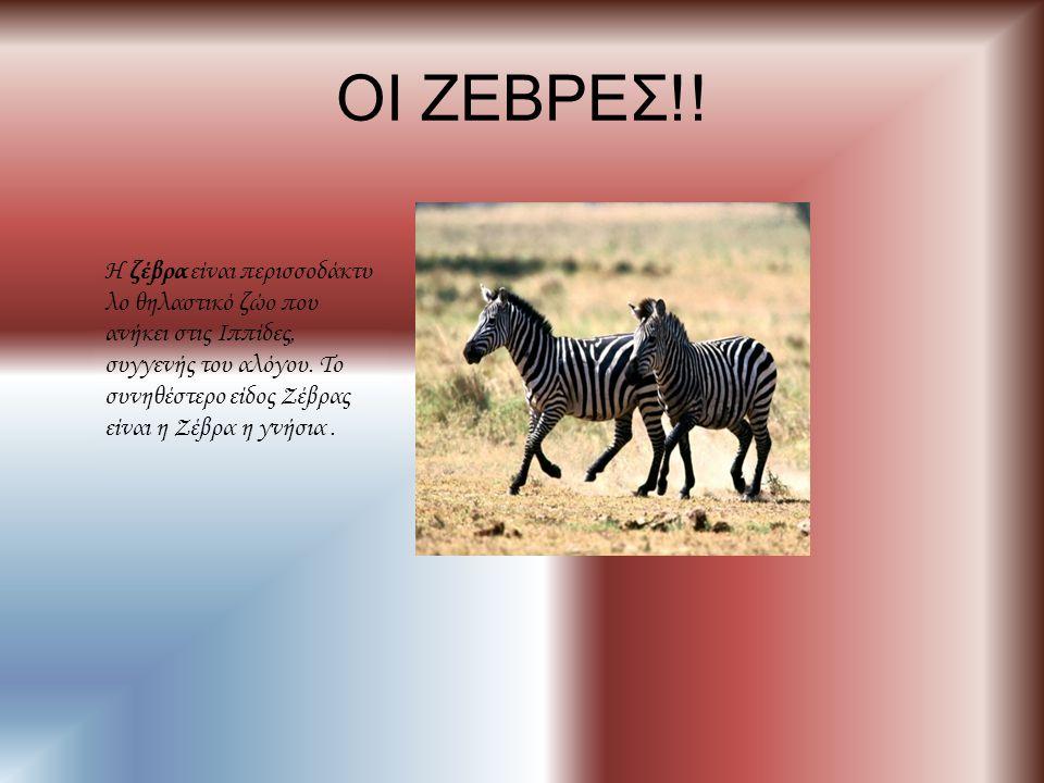 ΟΙ ΖΕΒΡΕΣ!! Η ζέβρα είναι περισσοδάκτυ λο θηλαστικό ζώο που ανήκει στις Ιππίδες, συγγενής του αλόγου. Το συνηθέστερο είδος Ζέβρας είναι η Ζέβρα η γνήσ