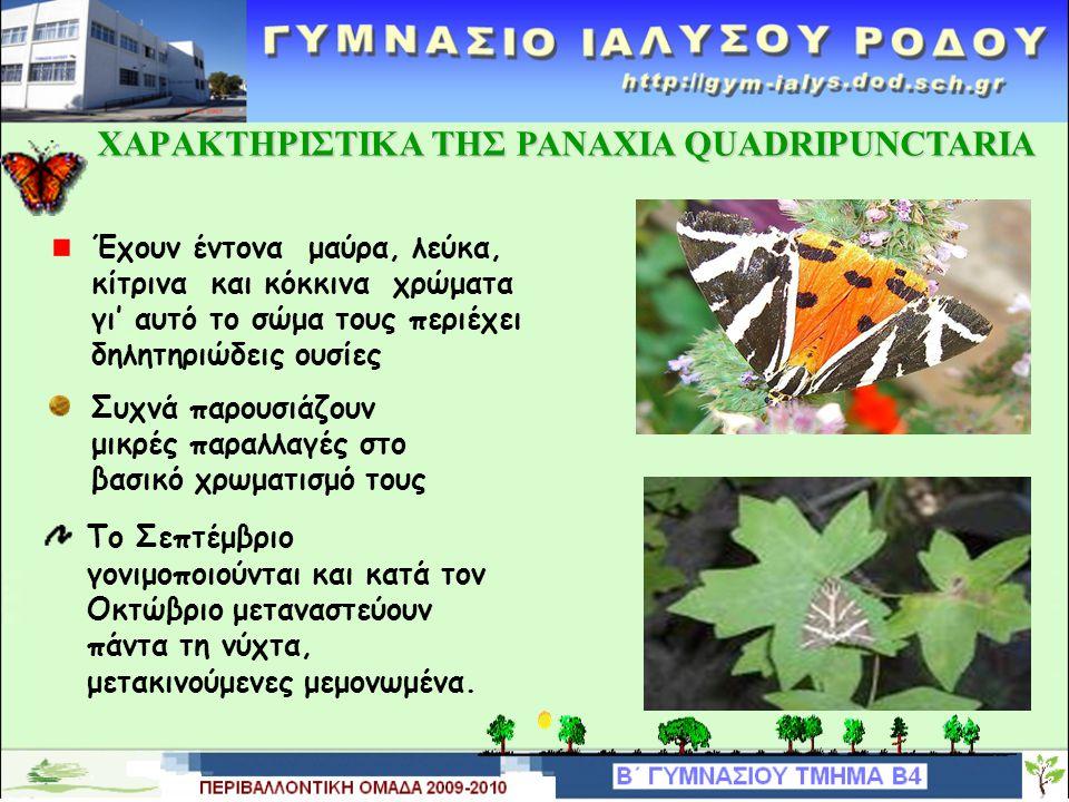 ΒΙΟΤΟΠΟΣ ΤΗΣ PANAXIAS QUADRIPUNCTARIA Είναι ένα μοναδικό οικοσύστημα, ένα μαγευτικό τοπίο όπου οφείλουμε να κάνουμε ησυχία Υπάρχει πλούσια χλωρίδα και