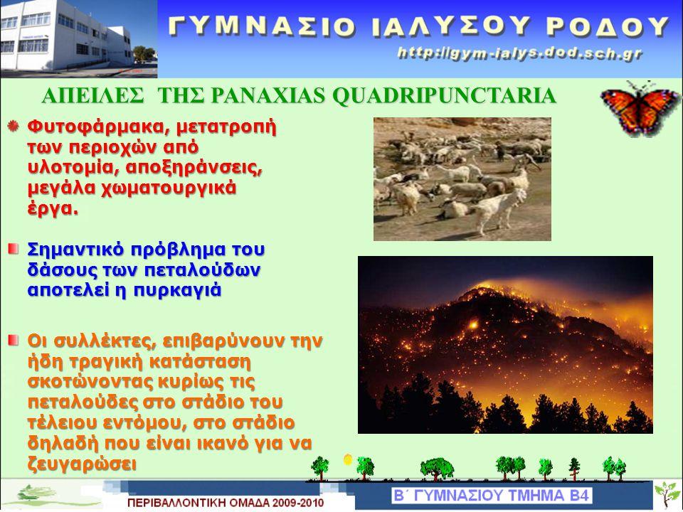 ΑΠΕΙΛΕΣ ΤΗΣ PANAXIAS QUADRIPUNCTARIA Φυτοφάρμακα, μετατροπή των περιοχών από υλοτομία, αποξηράνσεις, μεγάλα χωματουργικά έργα.