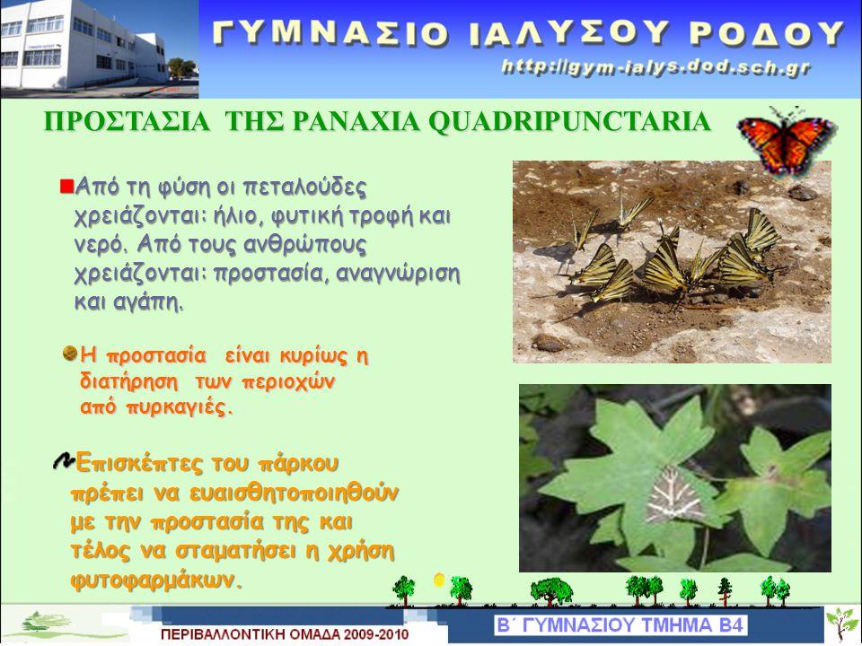 ΑΠΕΙΛΕΣ ΤΗΣ PANAXIAS QUADRIPUNCTARIA Φυτοφάρμακα, μετατροπή των περιοχών από υλοτομία, αποξηράνσεις, μεγάλα χωματουργικά έργα. Σημαντικό πρόβλημα του