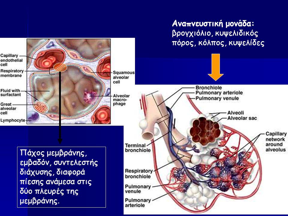 Αναπνευστική μονάδα: βρογχιόλιο, κυψελιδικός πόρος, κόλπος, κυψελίδες Πάχος μεμβράνης, εμβαδόν, συντελεστής διάχυσης, διαφορά πίεσης ανάμεσα στις δύο πλευρές της μεμβράνης.