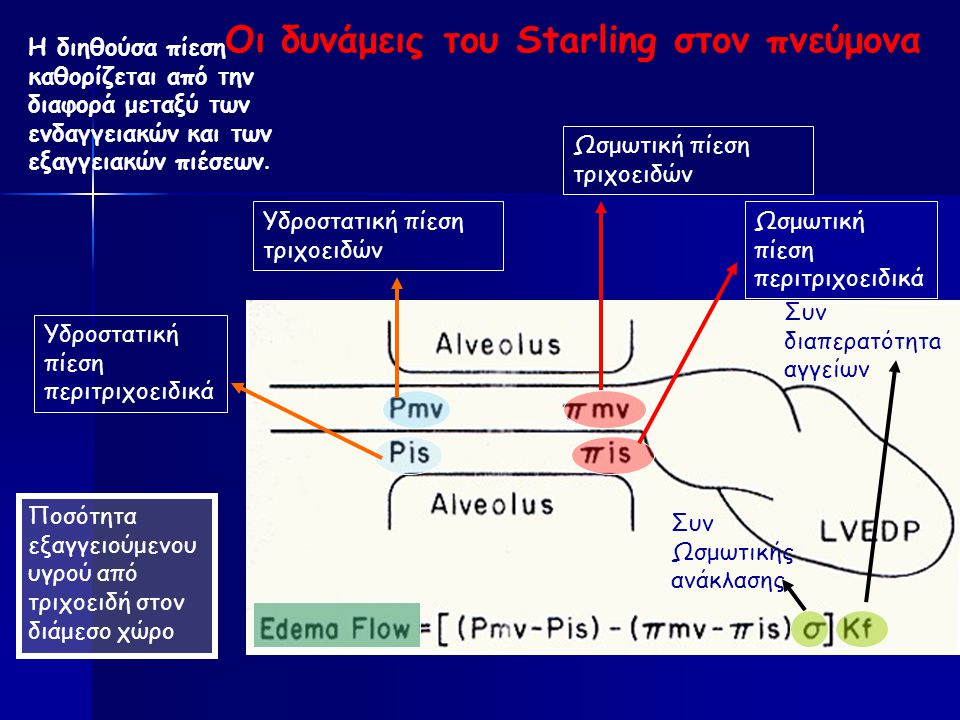 Οι δυνάμεις του Starling στον πνεύμονα Η διηθούσα πίεση καθορίζεται από την διαφορά μεταξύ των ενδαγγειακών και των εξαγγειακών πιέσεων.