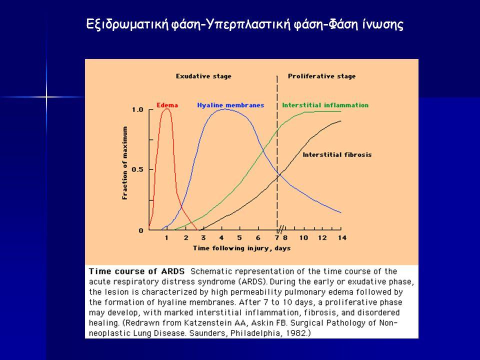 Εξιδρωματική φάση-Υπερπλαστική φάση-Φάση ίνωσης