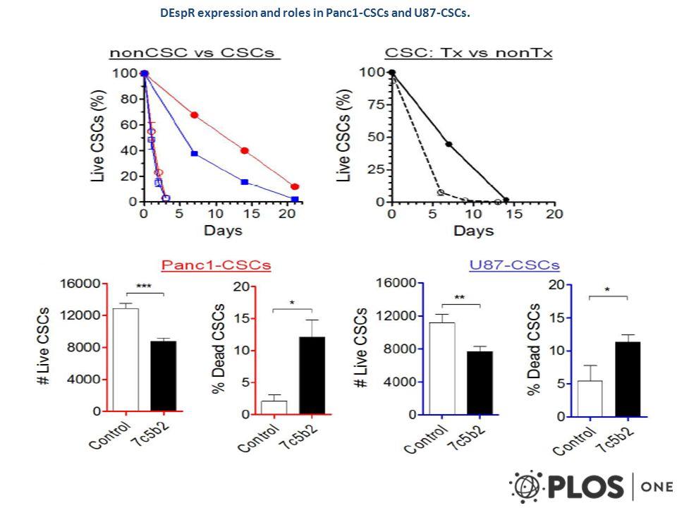 Μελετήθηκαν: μορφολογία και διεισδυτικότητα του καρκίνου, απώλεια κυττάρων, έκφραση και συνέπειες αναστολής DEspR (μέσω anti-DEspR mAb) σε PDAC Panc1-CSC and glioblastoma U87-CSC σε xenograft tumor models αρουραίων (nude rats) Τεχνικές  Ιστοπαθολογική ανάλυση  Ανοσοφθορισμός