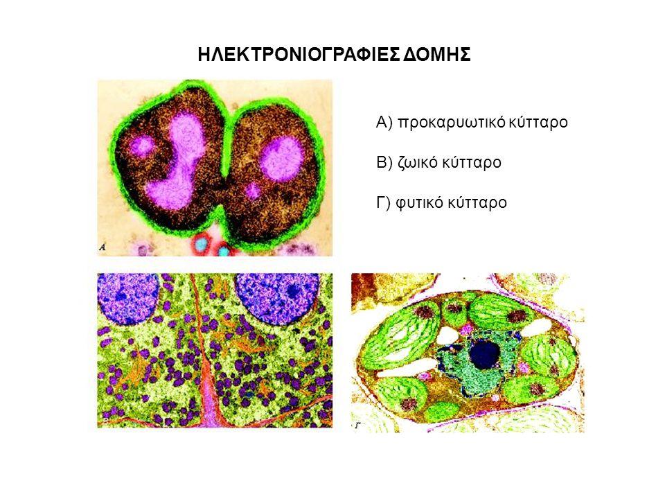 ΗΛΕΚΤΡΟΝΙΟΓΡΑΦΙΕΣ ΔΟΜΗΣ Α) προκαρυωτικό κύτταρο Β) ζωικό κύτταρο Γ) φυτικό κύτταρο