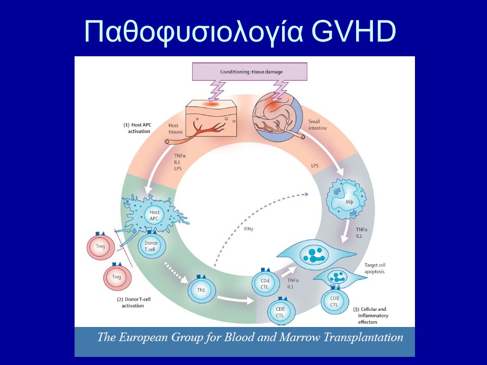 Παθοφυσιολογία GVHD