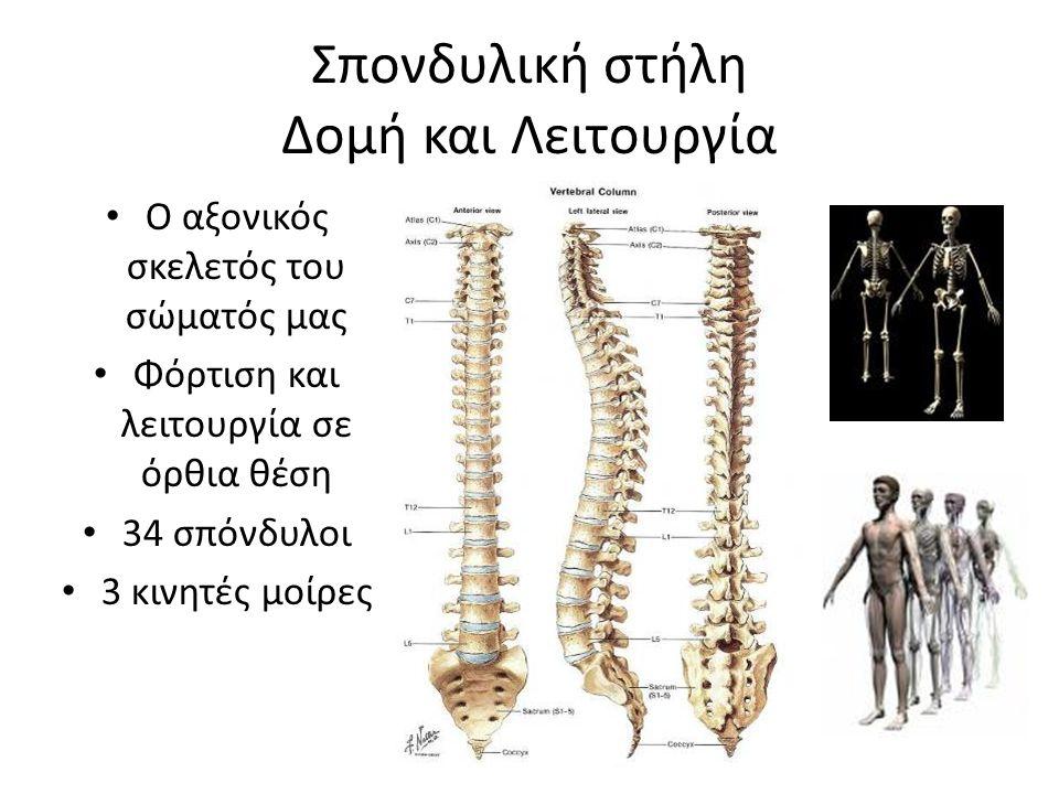 Σπονδυλική στήλη Δομή και Λειτουργία Ο αξονικός σ Φόρτιση και 34 σπόνδυλ 3 κινητές μ Ο αξονικός σκελετός του σώματός μας Φόρτιση και λειτουργία σε όρθ