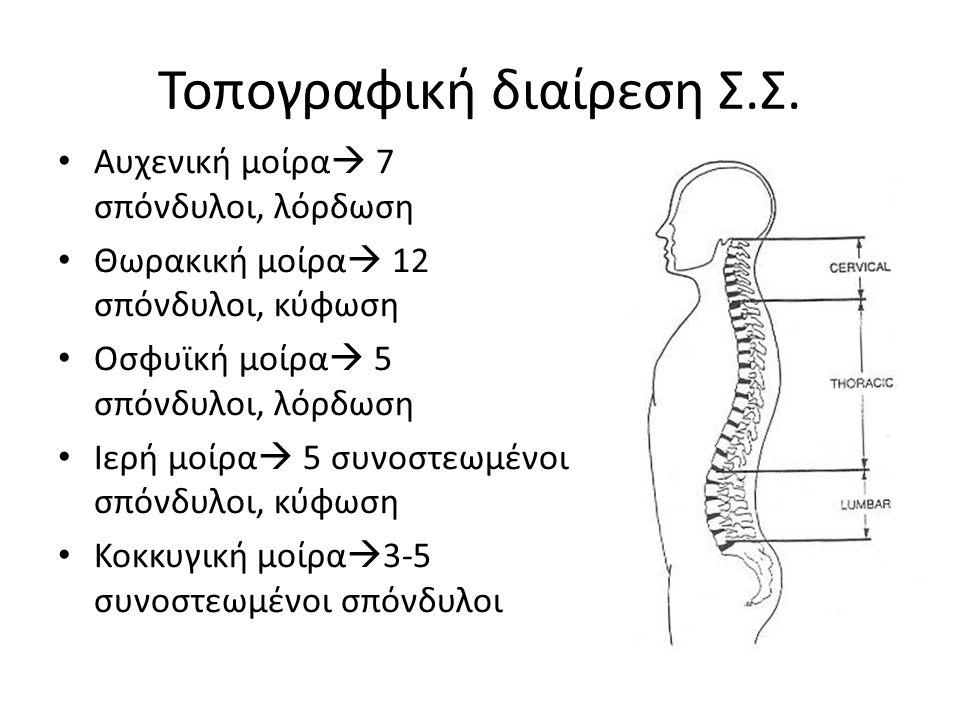 Τοπογραφική διαίρεση Σ.Σ. Αυχενική μοίρα  7 σπόνδυλοι, λόρδωση Θωρακική μοίρα  12 σπόνδυλοι, κύφωση Οσφυϊκή μοίρα  5 σπόνδυλοι, λόρδωση Ιερή μοίρα