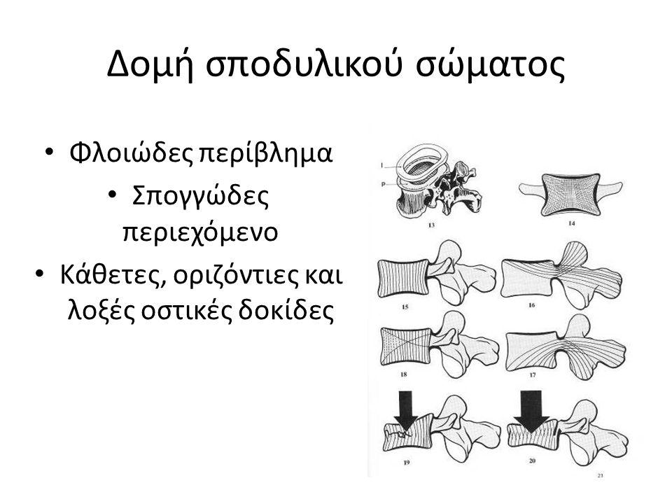 Δομή σποδυλικού σώματος Φλοιώδες περίβλημα Σπογγώδες περιεχόμενο Κάθετες, οριζόντιες και λοξές οστικές δοκίδες