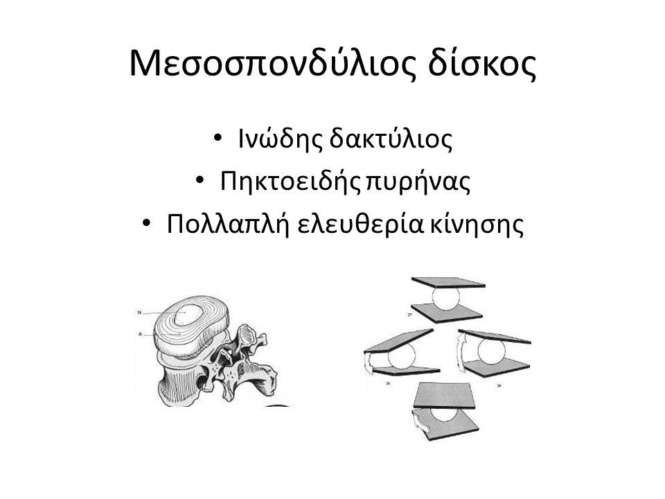 Ινώδης δακτύλιος Πηκτοειδής πυρήνας Πολλαπλή ελευθερία κίνησης