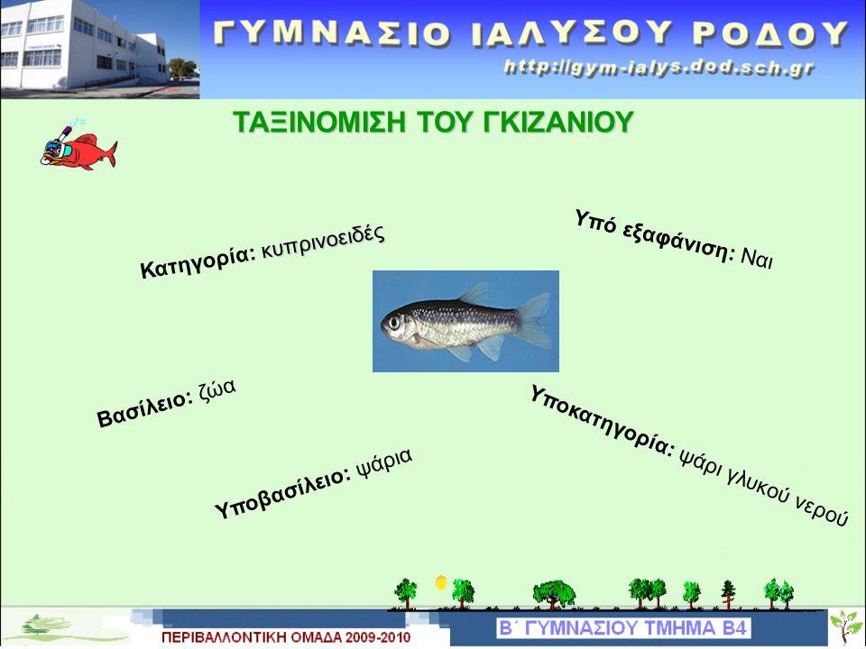 ΤΑΞΙΝΟΜΙΣΗ ΤΟΥ ΓΚΙΖΑΝΙΟΥ Υπό εξαφάνιση: Ναι κυπρινοειδές Κατηγορία: κυπρινοειδές Υποκατηγορία: ψάρι γλυκού νερού Βασίλειο: ζώα Υποβασίλειο: ψάρια