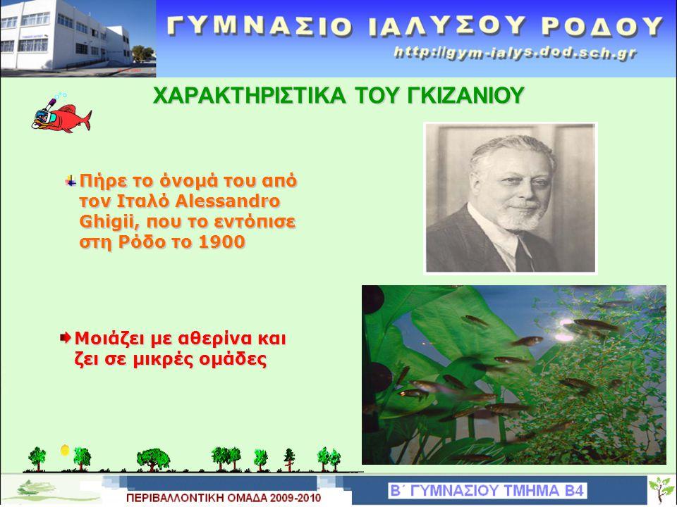 Μοιάζει με αθερίνα και ζει σε μικρές ομάδες XAΡAKTHΡIΣTIKA TOY ΓΚΙΖΑΝΙΟΥ Πήρε το όνομά του από τον Ιταλό Alessandro Ghigii, που το εντόπισε στη Ρόδο το 1900