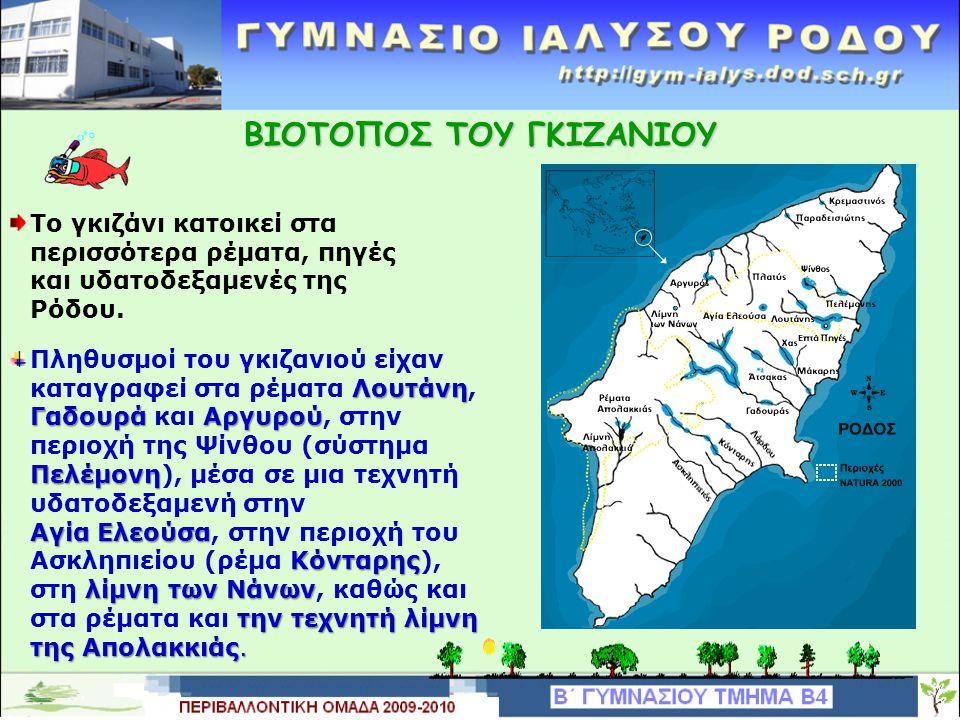 ΒΙΟΤΟΠΟΣ ΤΟΥ ΓΚΙΖΑΝΙΟΥ Το γκιζάνι κατοικεί στα περισσότερα ρέματα, πηγές και υδατοδεξαμενές της Ρόδου.