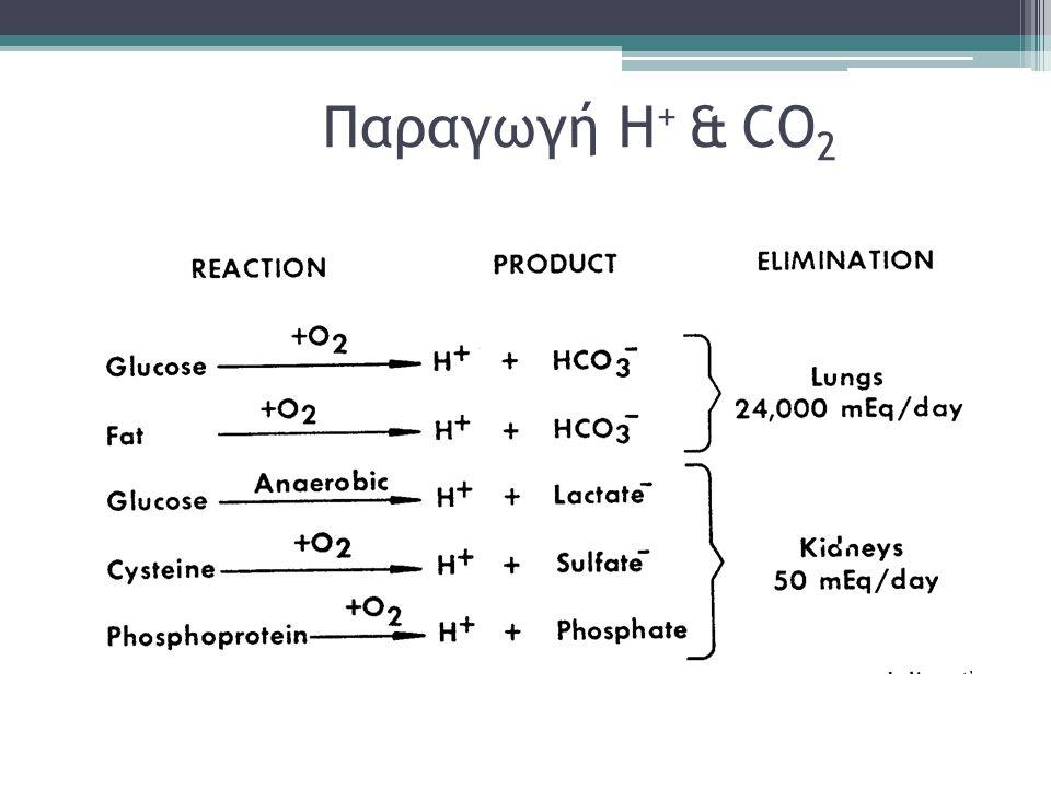 Παραγωγή Η + & CO 2