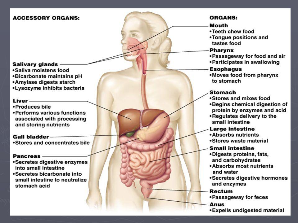 Αντιμετώπιση ΕΠΕ ► Τήρηση των συστάσεων για υγιεινή διατροφή με πολλές ίνες & λίγα λιπαρά και ζάχαρη.