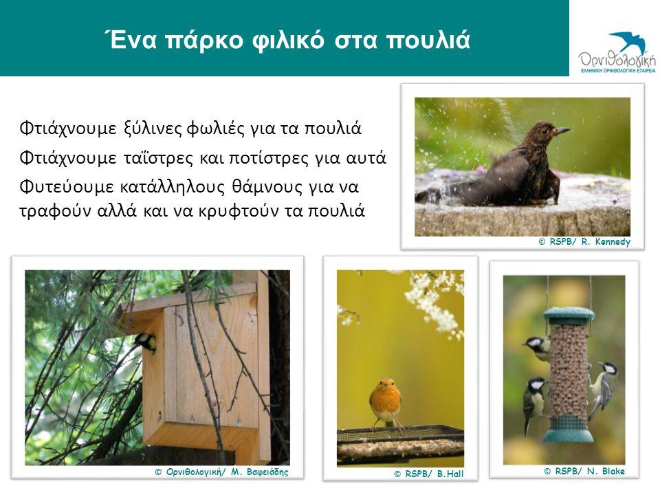 Ένα πάρκο φιλικό στα πουλιά Φτιάχνουμε ξύλινες φωλιές για τα πουλιά Φτιάχνουμε ταΐστρες και ποτίστρες για αυτά Φυτεύουμε κατάλληλους θάμνους για να τρ