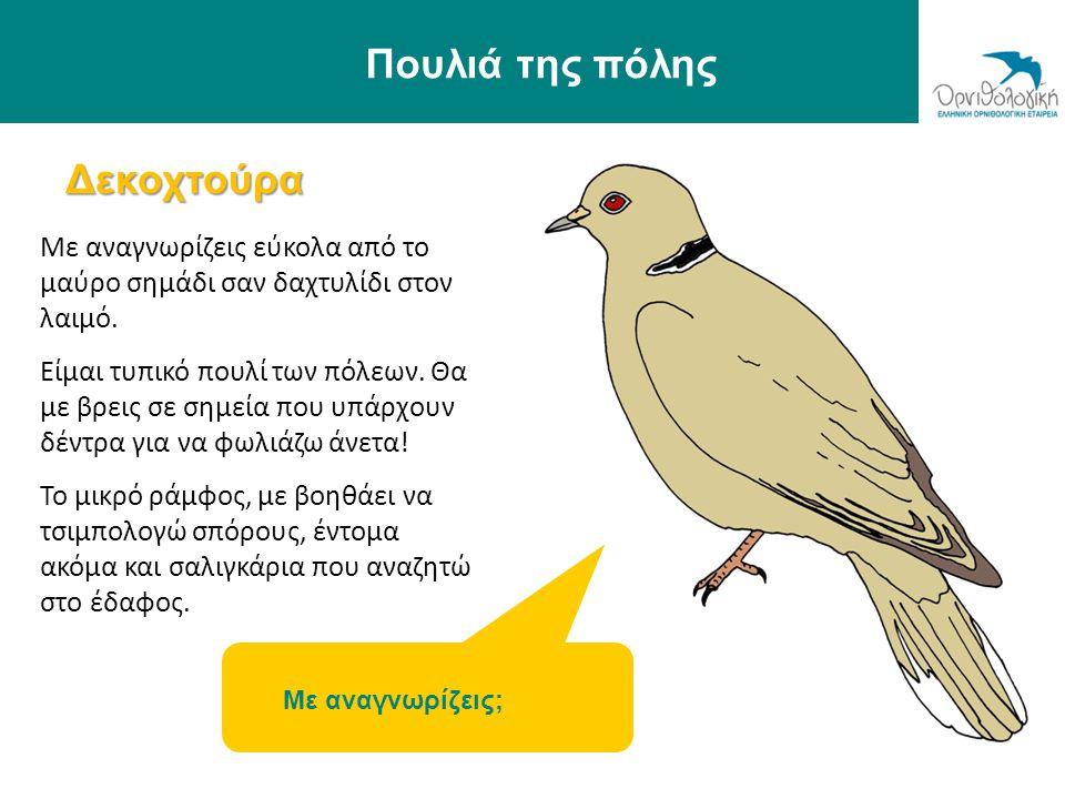 Ένα πάρκο φιλικό στα πουλιά Φτιάχνουμε ξύλινες φωλιές για τα πουλιά Φτιάχνουμε ταΐστρες και ποτίστρες για αυτά Φυτεύουμε κατάλληλους θάμνους για να τραφούν αλλά και να κρυφτούν τα πουλιά © Ορνιθολογική/ Μ.