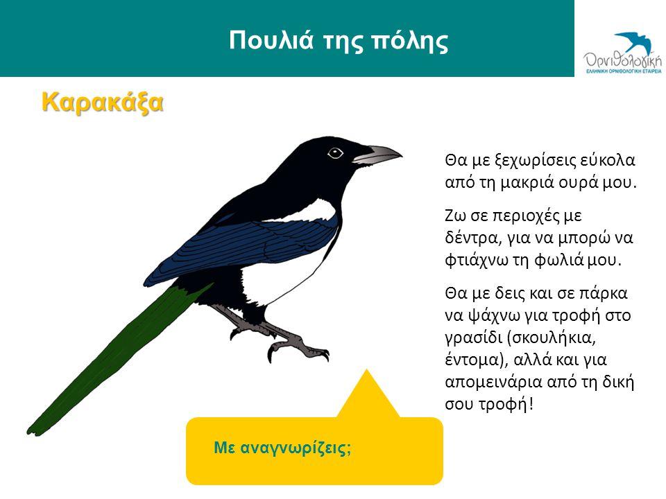 Καρακάξα Πουλιά της πόλης Με αναγνωρίζεις; Θα με ξεχωρίσεις εύκολα από τη μακριά ουρά μου. Ζω σε περιοχές με δέντρα, για να μπορώ να φτιάχνω τη φωλιά