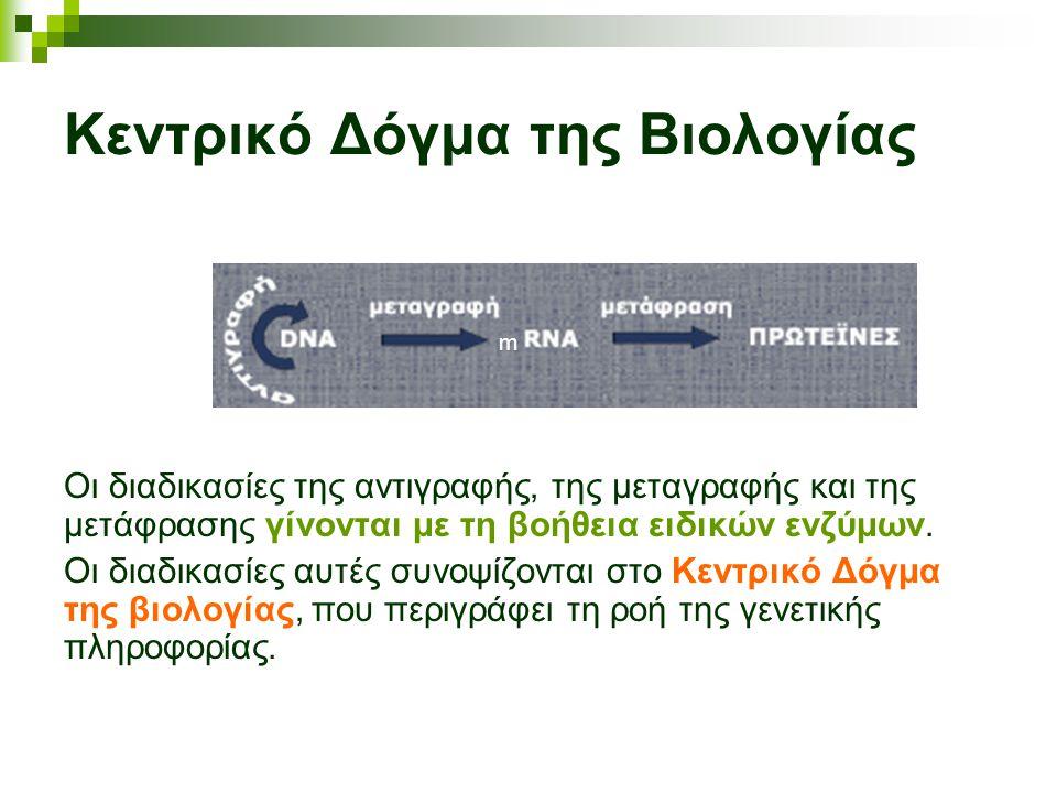Κεντρικό Δόγμα της Βιολογίας Οι διαδικασίες της αντιγραφής, της μεταγραφής και της μετάφρασης γίνονται με τη βοήθεια ειδικών ενζύμων. Οι διαδικασίες α