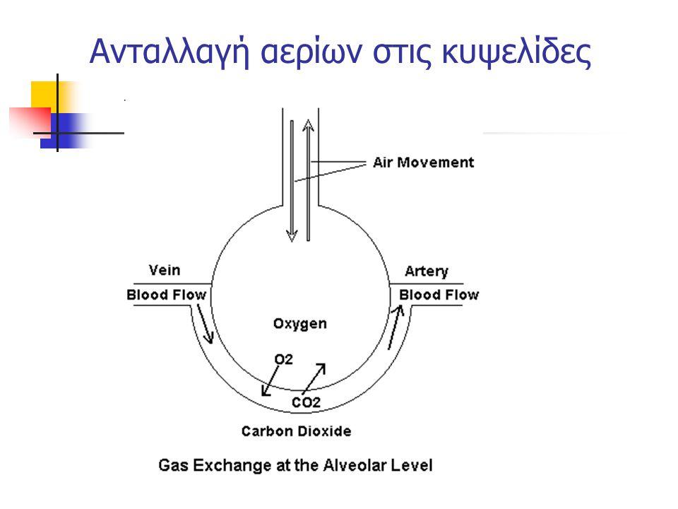 V  Q V < QV > Q Φυσιολογικός πνεύμονας Αερισμός νεκρού χώρου Shunt Φυσιολογικό Ανατομικό R L R L R L