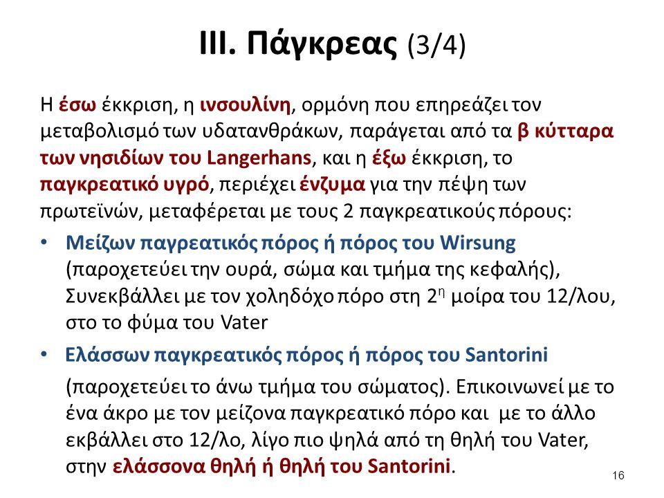 ΙΙΙ. Πάγκρεας (3/4) Η έσω έκκριση, η ινσουλίνη, ορμόνη που επηρεάζει τον μεταβολισμό των υδατανθράκων, παράγεται από τα β κύτταρα των νησιδίων του Lan