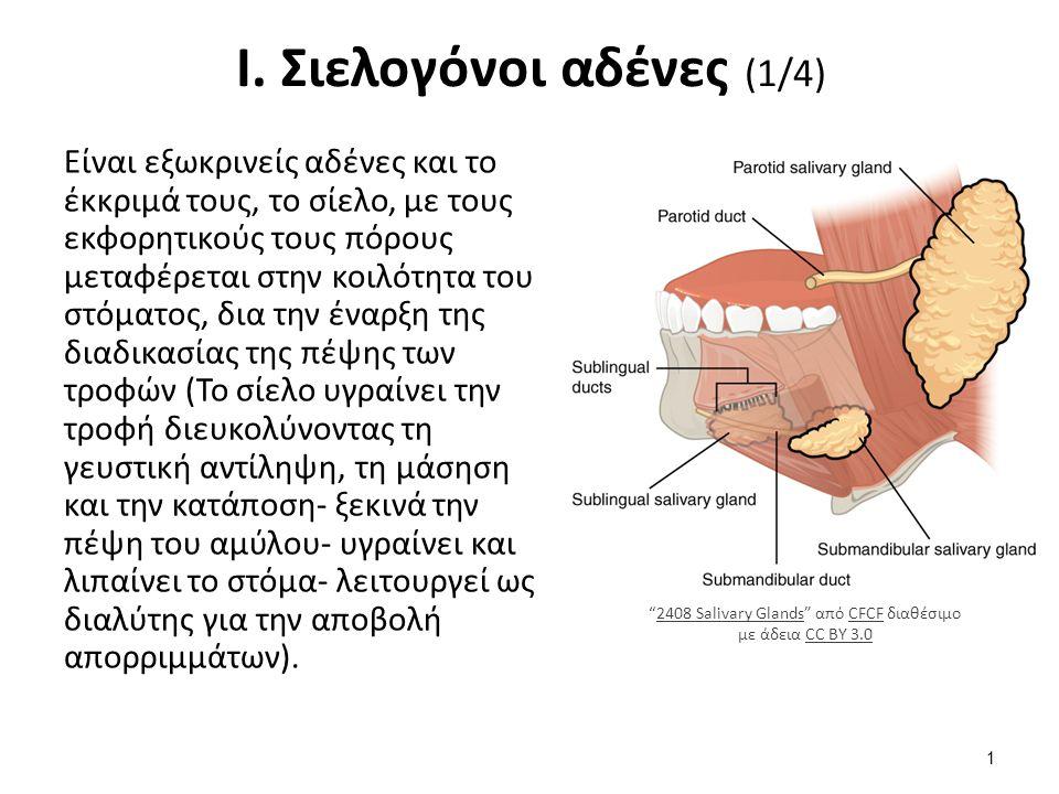 Ι. Σιελογόνοι αδένες (1/4) Είναι εξωκρινείς αδένες και το έκκριμά τους, το σίελο, με τους εκφορητικούς τους πόρους μεταφέρεται στην κοιλότητα του στόμ