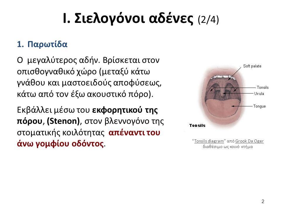 Ι. Σιελογόνοι αδένες (2/4) 1.Παρωτίδα O μεγαλύτερος αδήν. Βρίσκεται στον οπισθογναθικό χώρο (μεταξύ κάτω γνάθου και μαστοειδούς αποφύσεως, κάτω από το