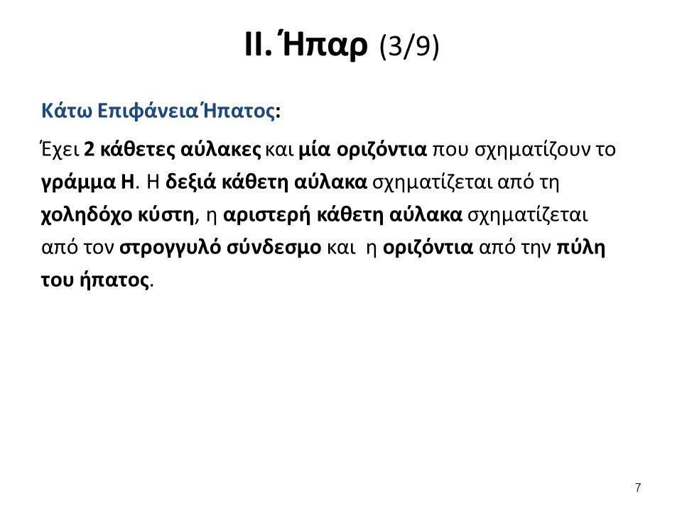 ΙΙ. Ήπαρ (3/9) Κάτω Επιφάνεια Ήπατος: Έχει 2 κάθετες αύλακες και μία οριζόντια που σχηματίζουν το γράμμα Η. Η δεξιά κάθετη αύλακα σχηματίζεται από τη