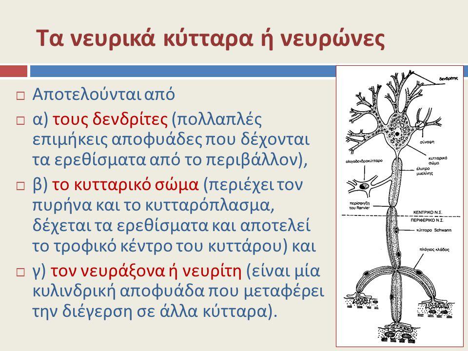 Τα νευρικά κύτταρα ή νευρώνες  Αποτελούνται από  α) τους δενδρίτες (πολλαπλές επιμήκεις αποφυάδες που δέχονται τα ερεθίσματα από το περιβάλλον),  β