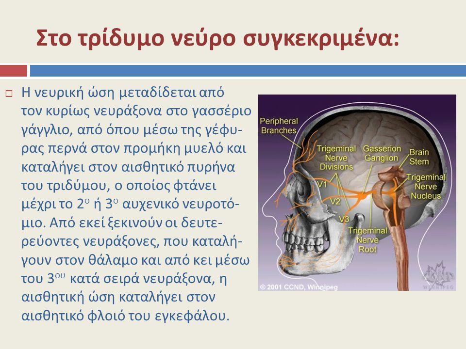 Στο τρίδυμο νεύρο συγκεκριμένα:  Η νευρική ώση μεταδίδεται από τον κυρίως νευράξονα στο γασσέριο γάγγλιο, από όπου μέσω της γέφυ- ρας περνά στον προμ
